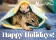 E-Card: PW Holiday