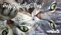 E-Card: Mother's Day Cat